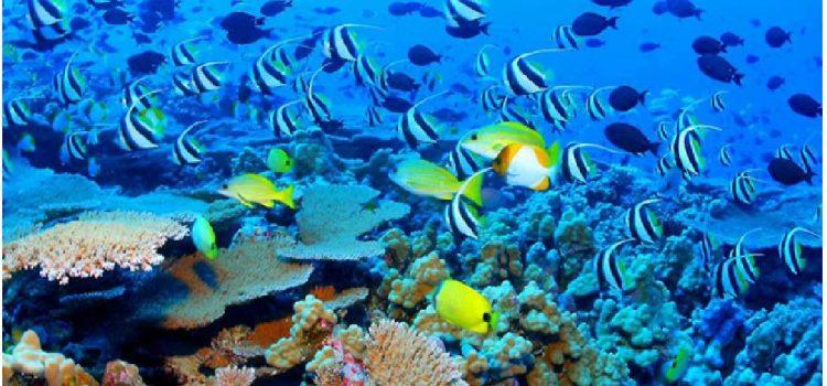 Phu Quoc – île d'émeraude du tourisme vietnamien