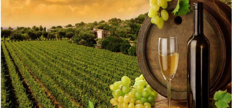 Languedoc Roussillon, une région à forte tradition viticole